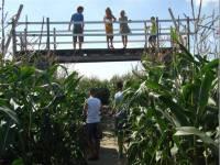 Maisdoolhof & Bloemenboerderij Saaxumhuizen
